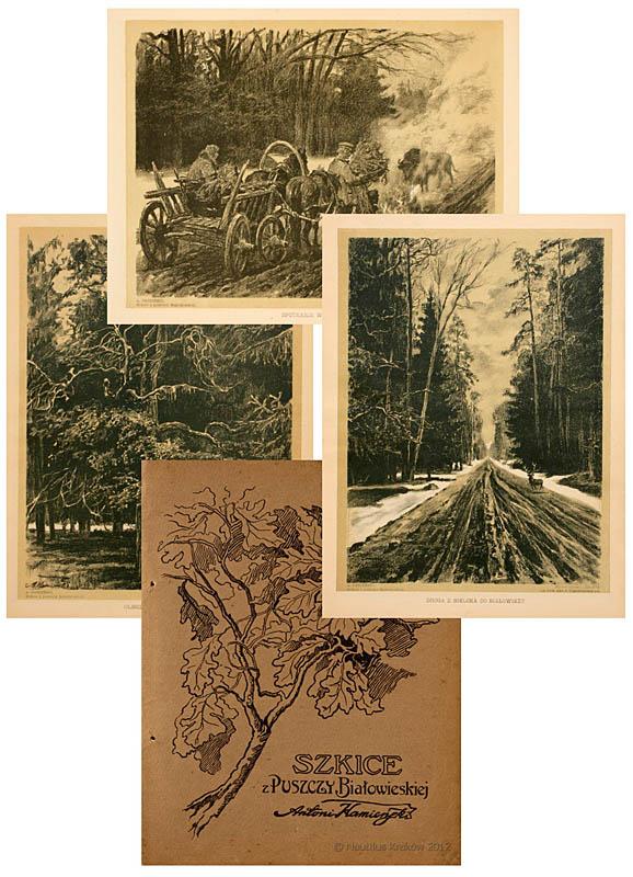 Szkice z Puszczy Białowieskiej 14 kartonów Antoniego Kamieńskiego, 1912