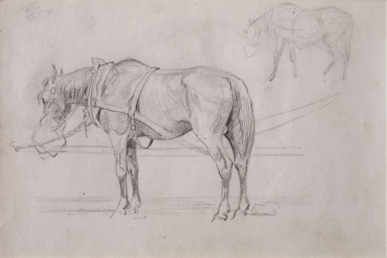 Szkic konia pociągowego na popasie, 1922