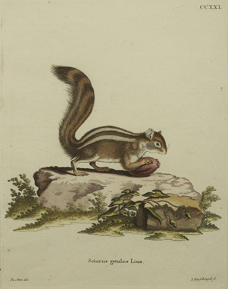 Wiewiórka, II poł. XVIIIw.