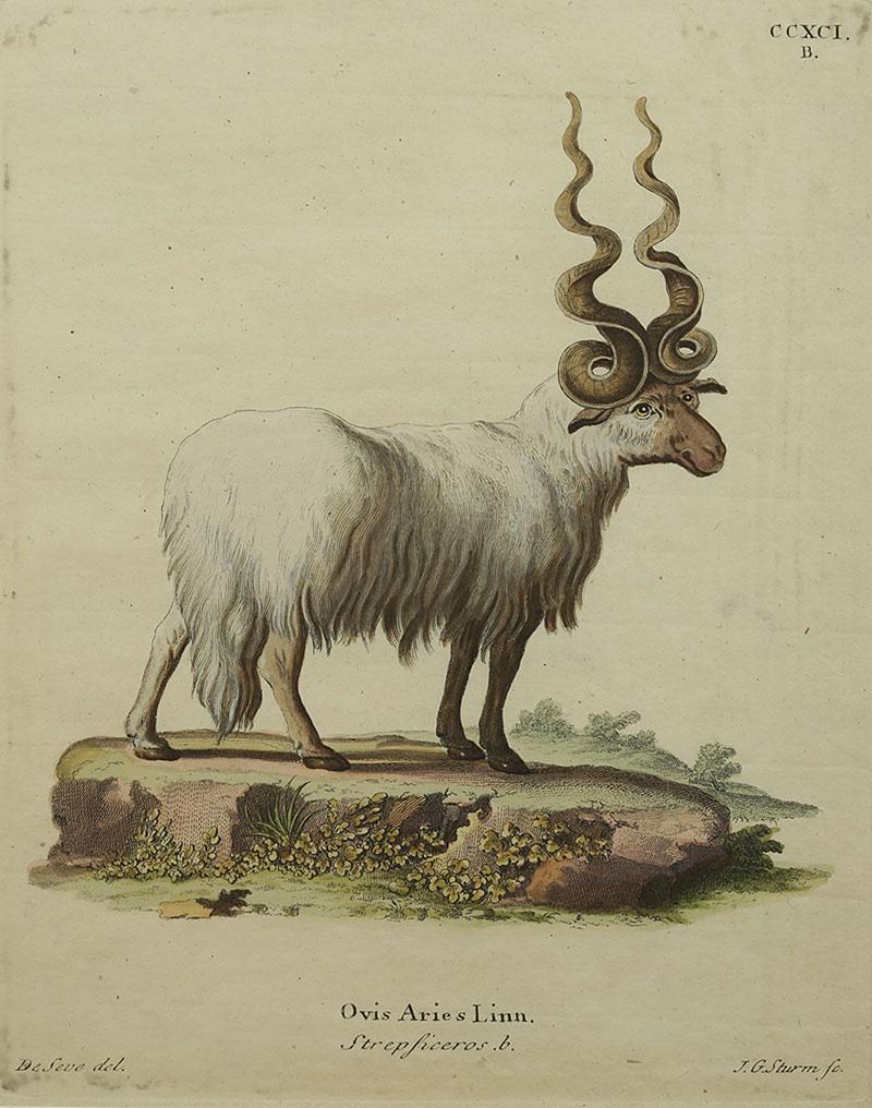 Baran, II poł XVIIIw.