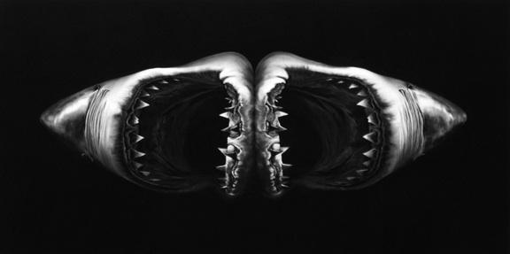 Untitled (Double Shark)