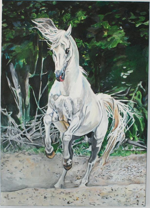 Koń, 2016
