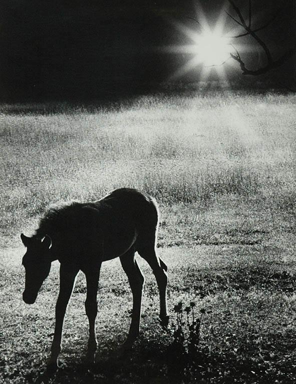 The horse, przed 1970
