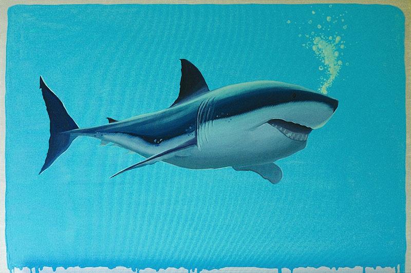 Shark, 2016