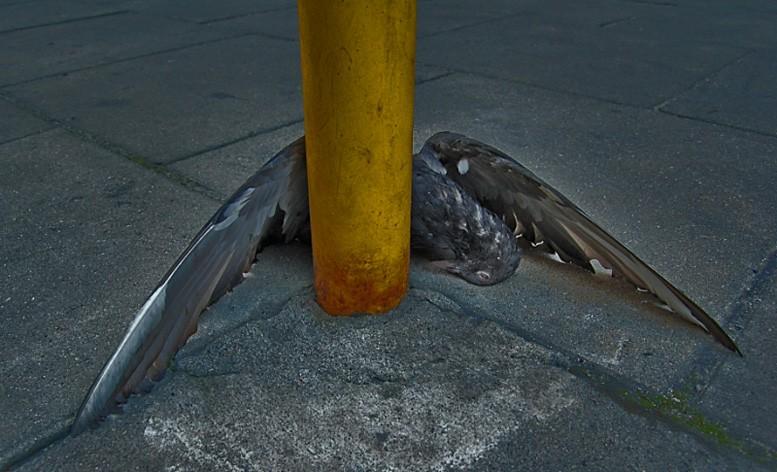 Upadły (2006)