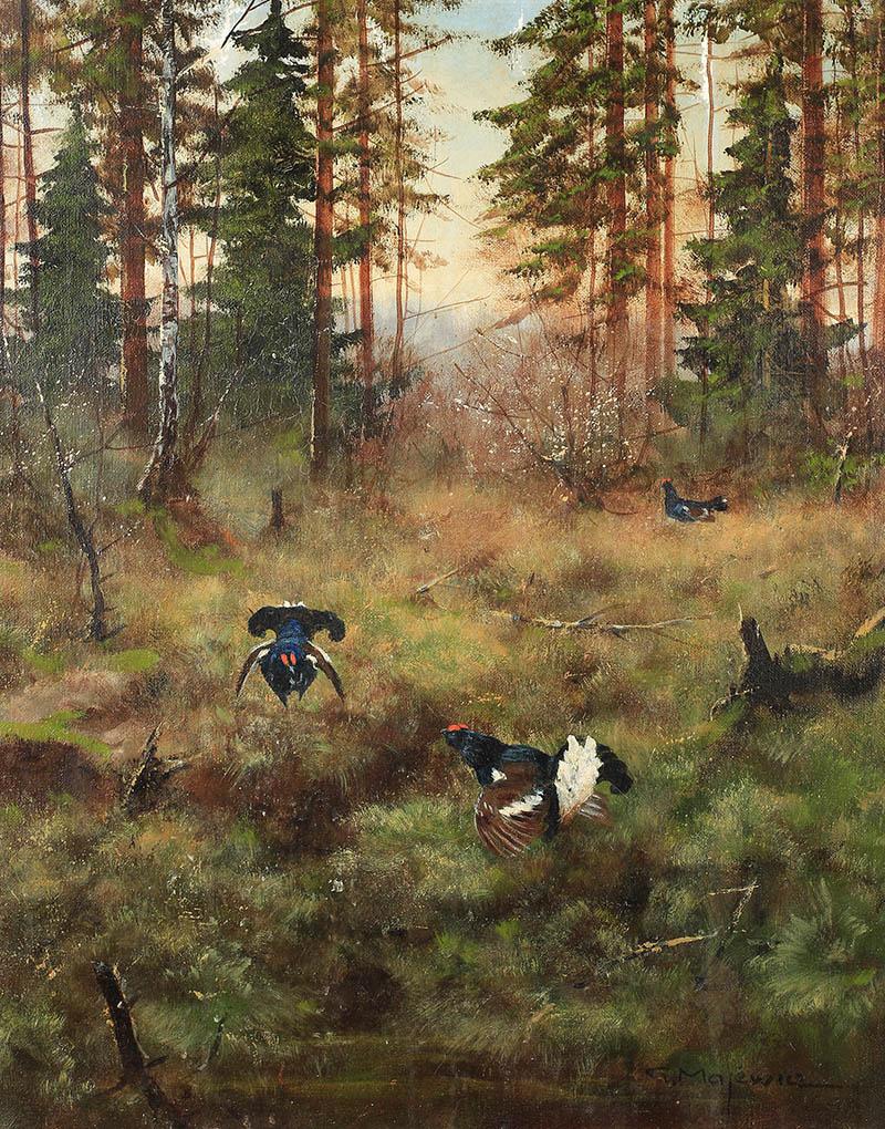 Głuszce na leśnej polanie