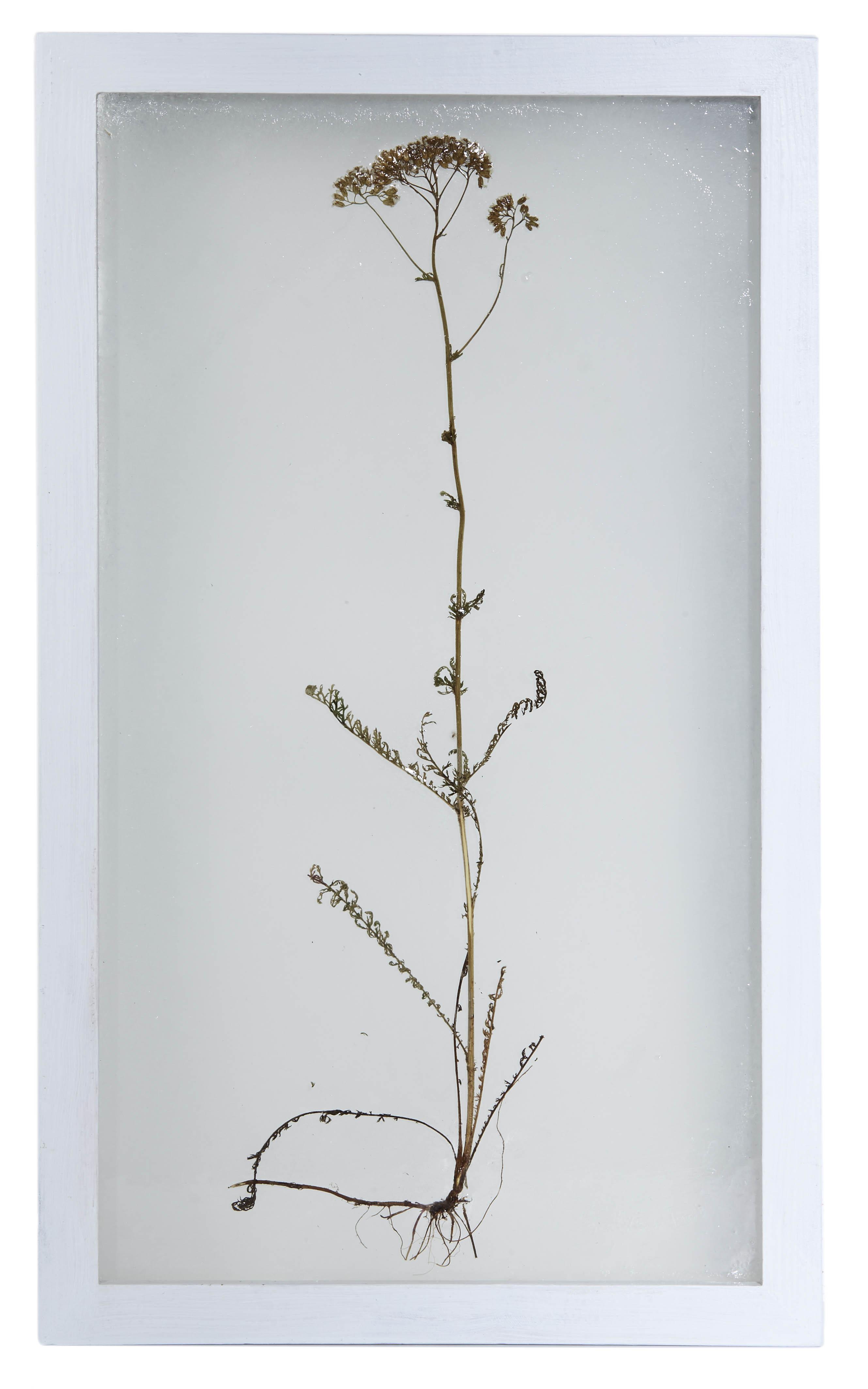 """""""Goniądz. Choleryczna górka"""" zcyklu Herbarium, 2016, Współrzędne zbioru: 53°29′23′′N 22°44′00′′E"""
