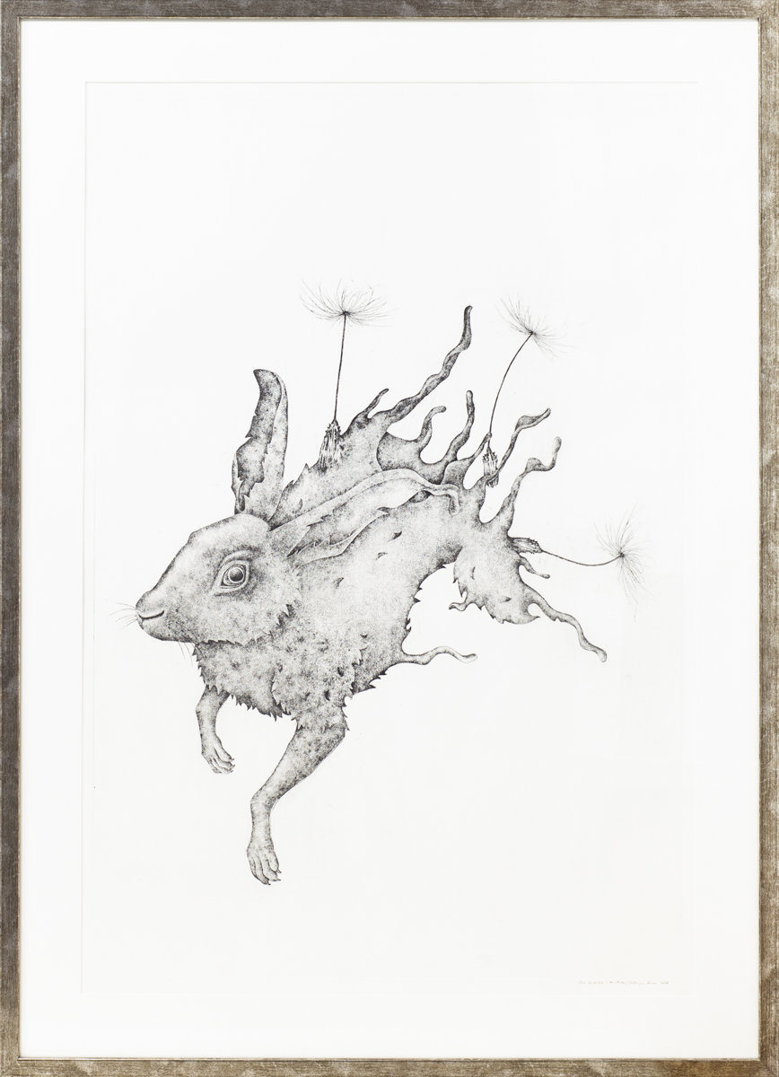 Hare dandelion, 2016