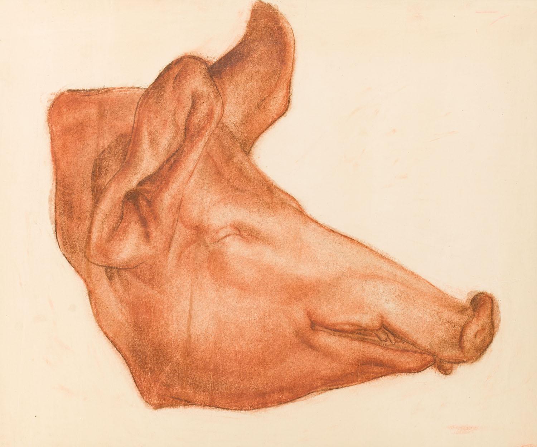 """Głowa świni (szkic do obrazu """"Martwa natura""""), około 1929"""