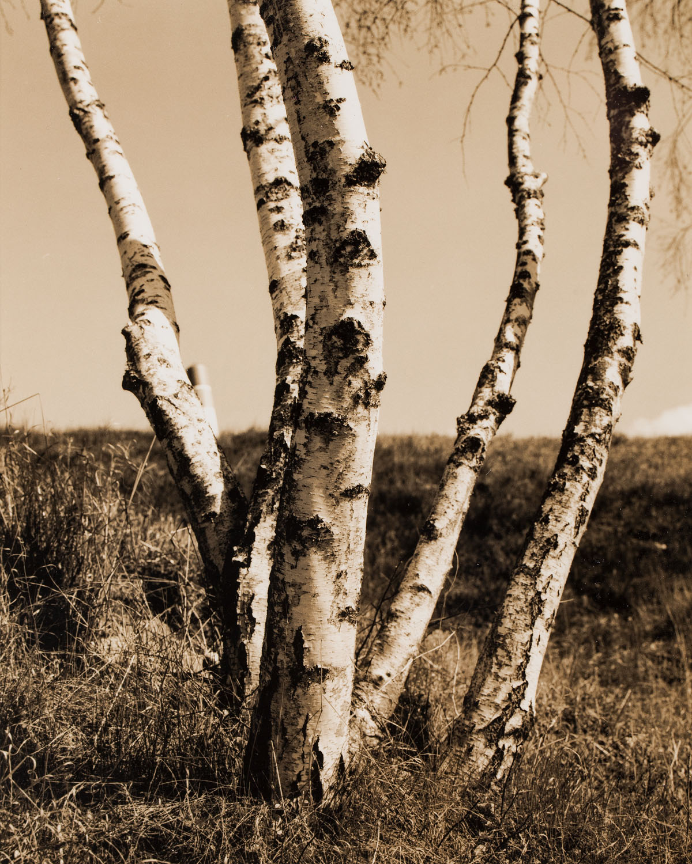 """Nature"", 2011"