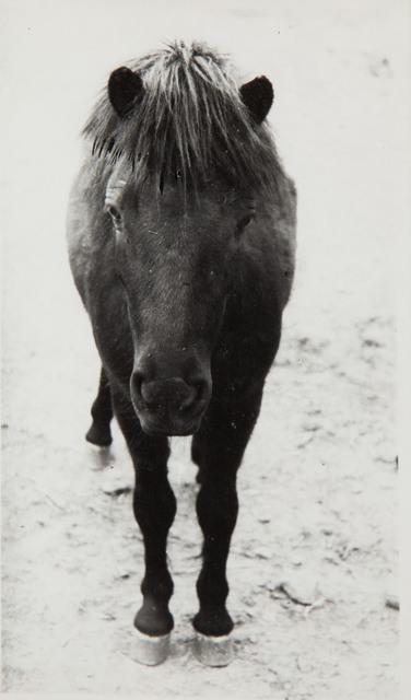 Bez tytułu, 1979