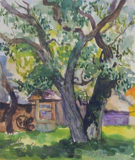 Drzewo, 1949 r.
