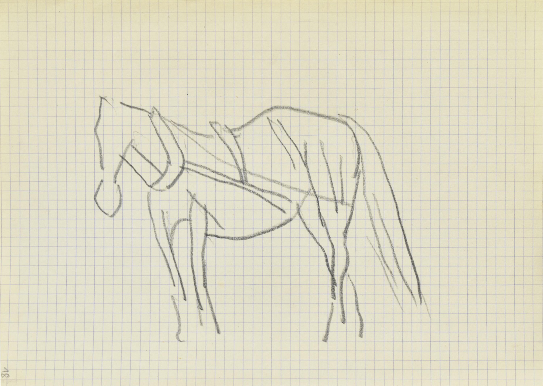 Koń w uprzęży