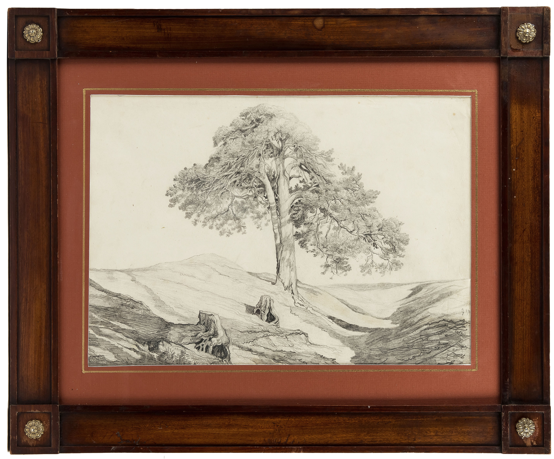 Samotne drzewo, 1871 r.