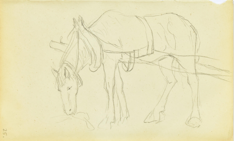 Koń stojący w zaprzęgu ukazany z lewego boku skubiący trawę