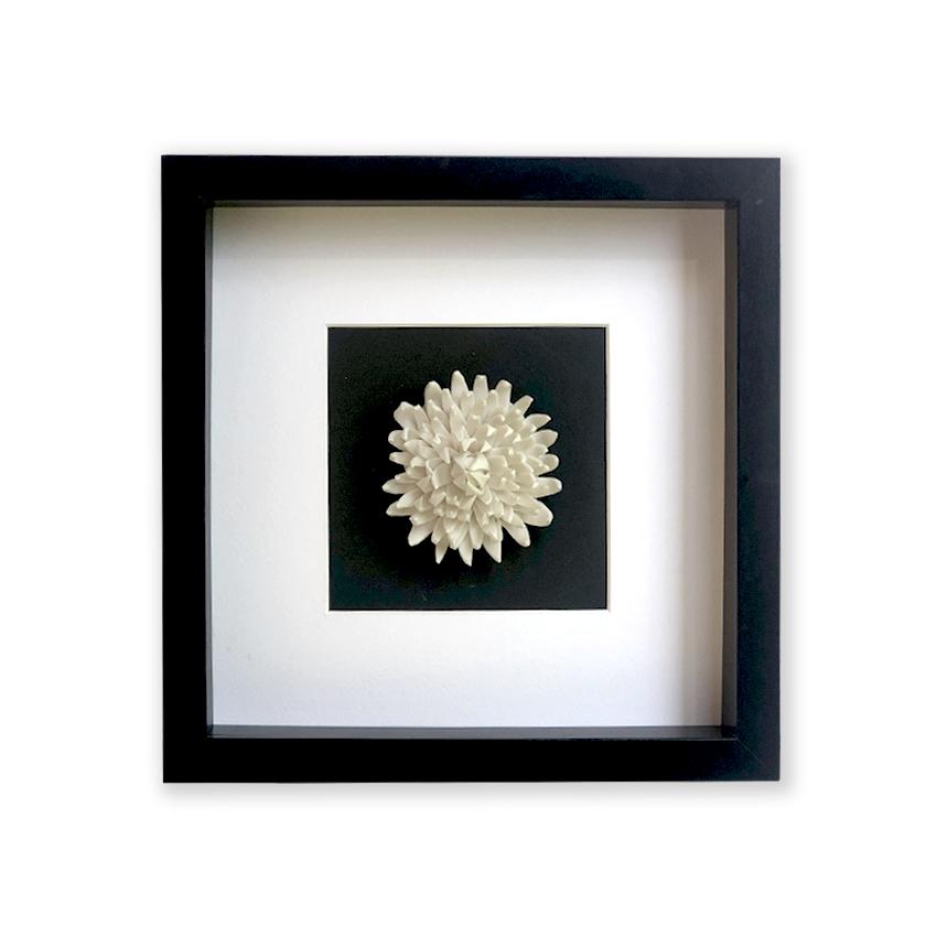 Chrysanthemum, 2020