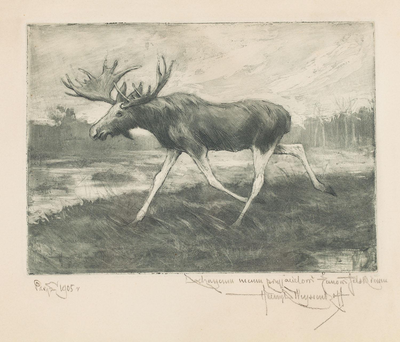 Łoś, 1905