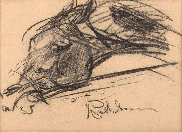 Głowa konia