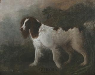 Wyżeł minsterlandzki, 1808