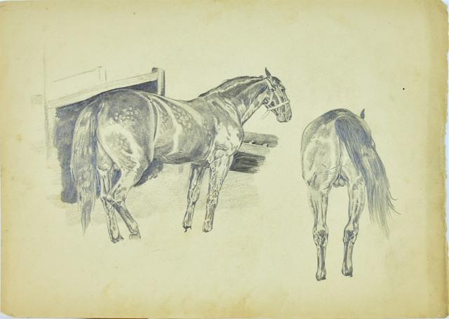 Szkice konia