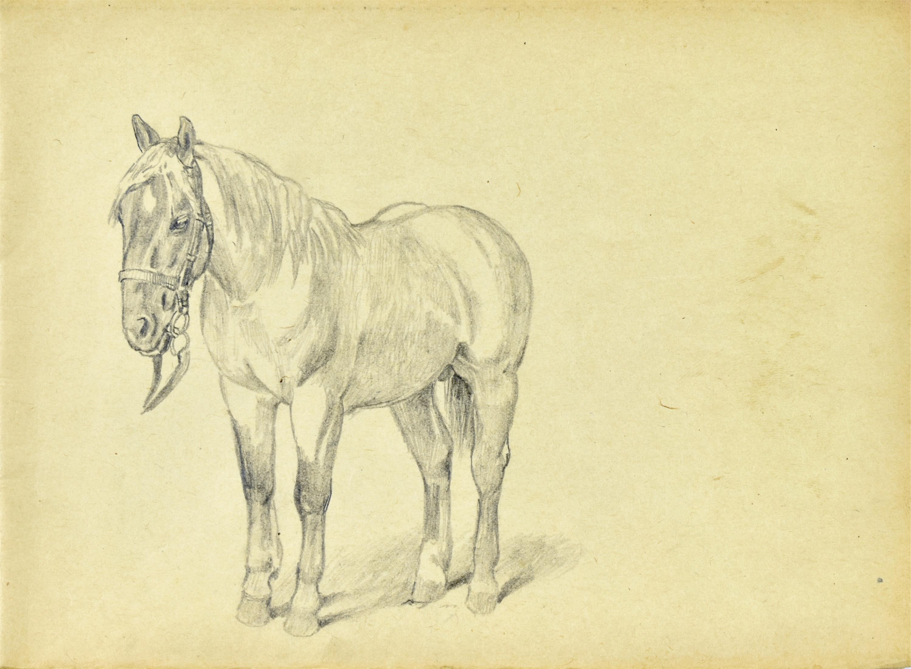 Szkic konia