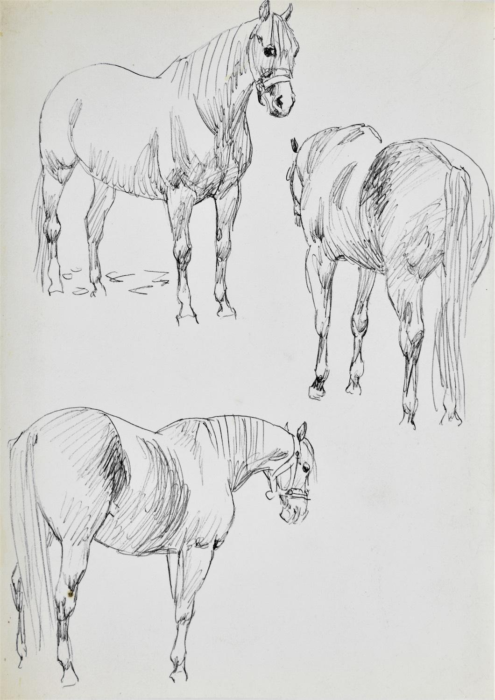 Studia konia