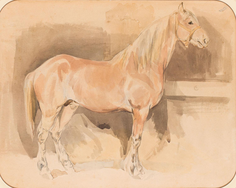 Studium konia w stajni