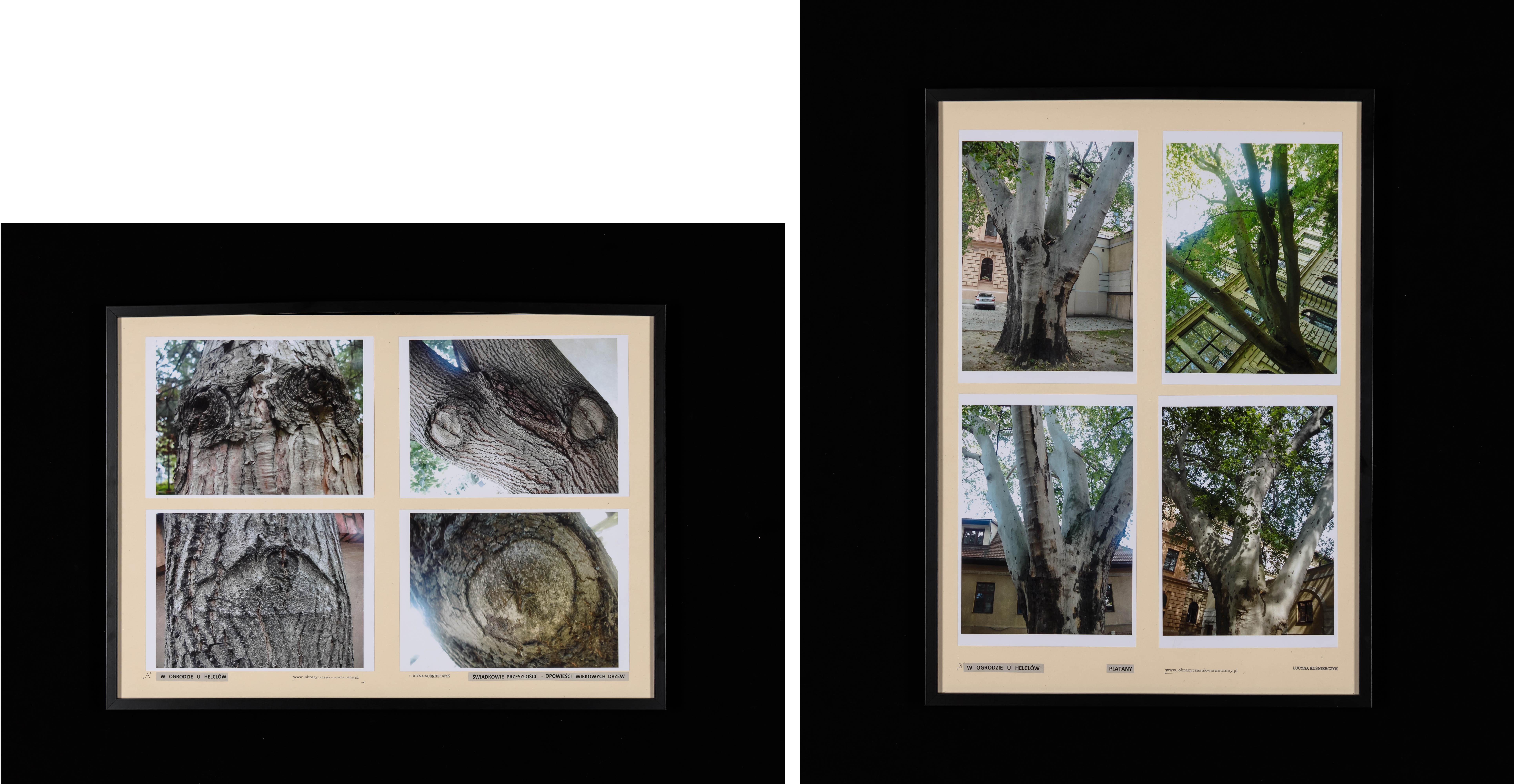"""Dyptyk: W ogrodzie u Helclów """"Świadkowie przeszłości-Opowieści wiekowych drzew"""", """"Platany"""", 2020"""