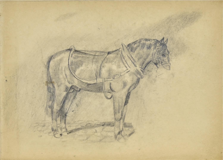 Szkic konia w uprzęży