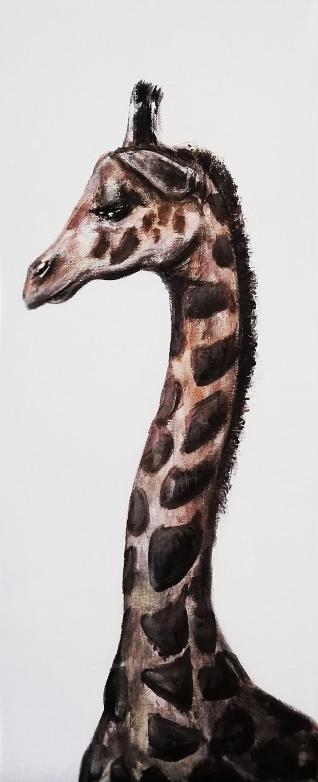Żyrafa, 2019