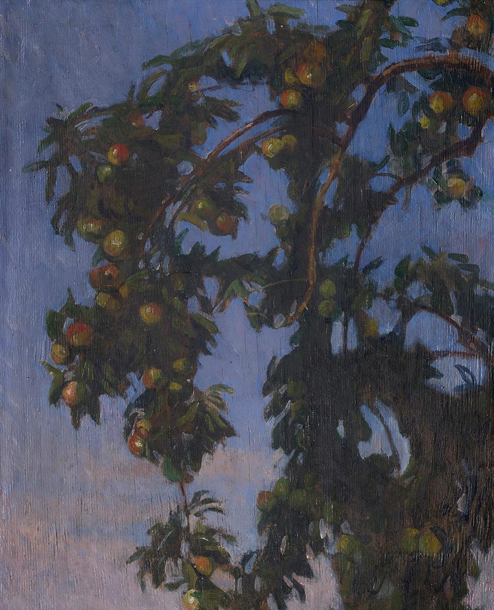 Gałęzie jabłoni