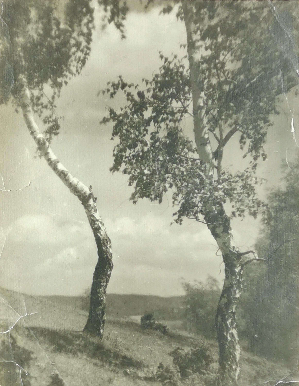 Fotogram - Dwie brzozy, ok. 1930