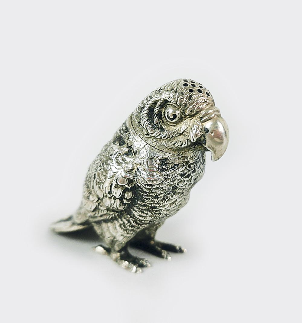 Solniczka - papuga