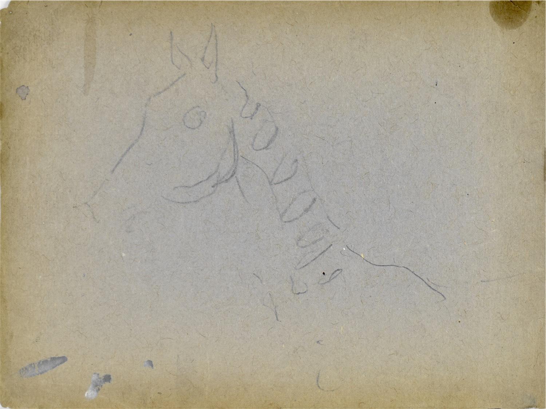 Szkic głowy konia