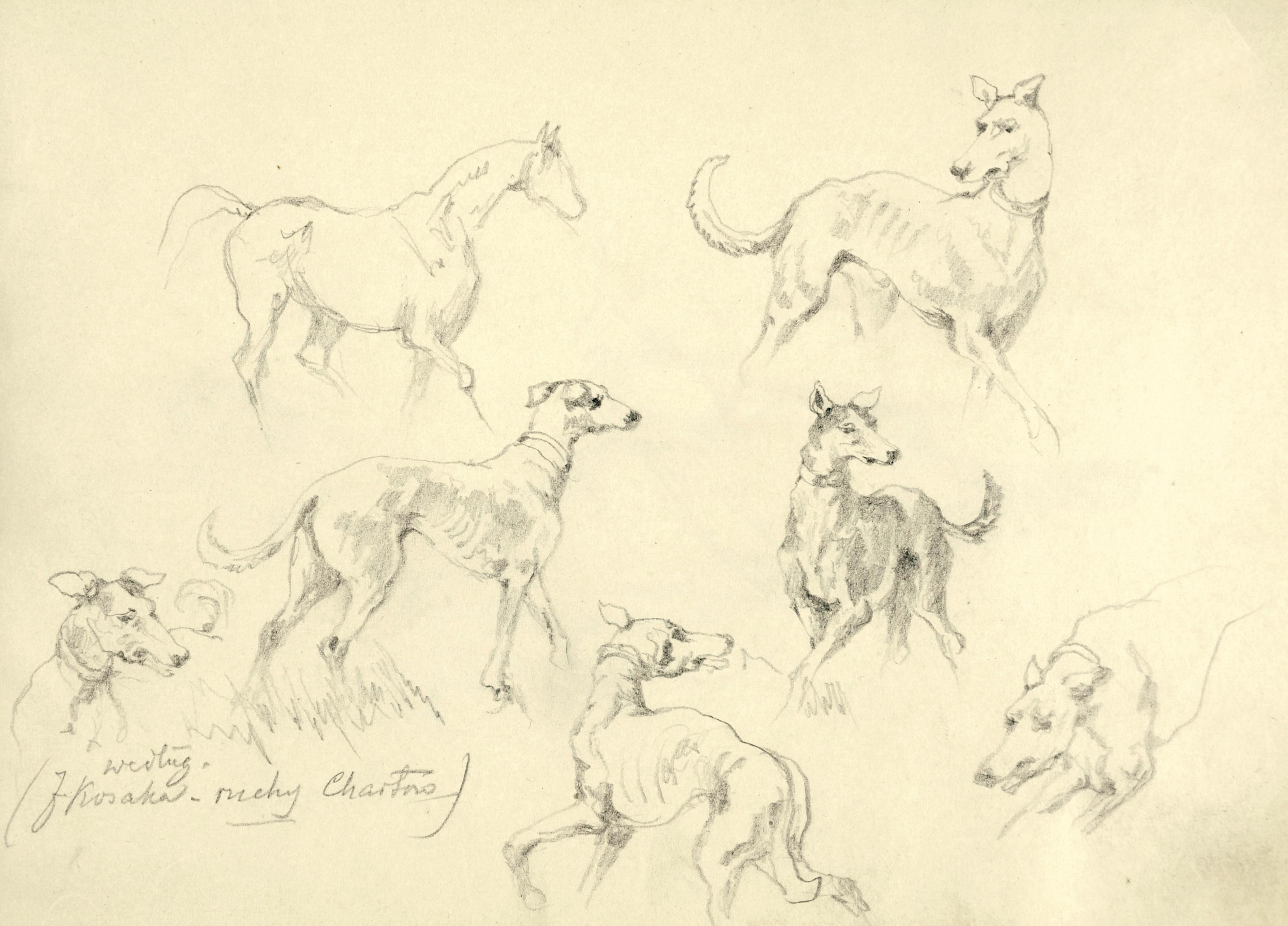Szkice konia i chartów w ruchu
