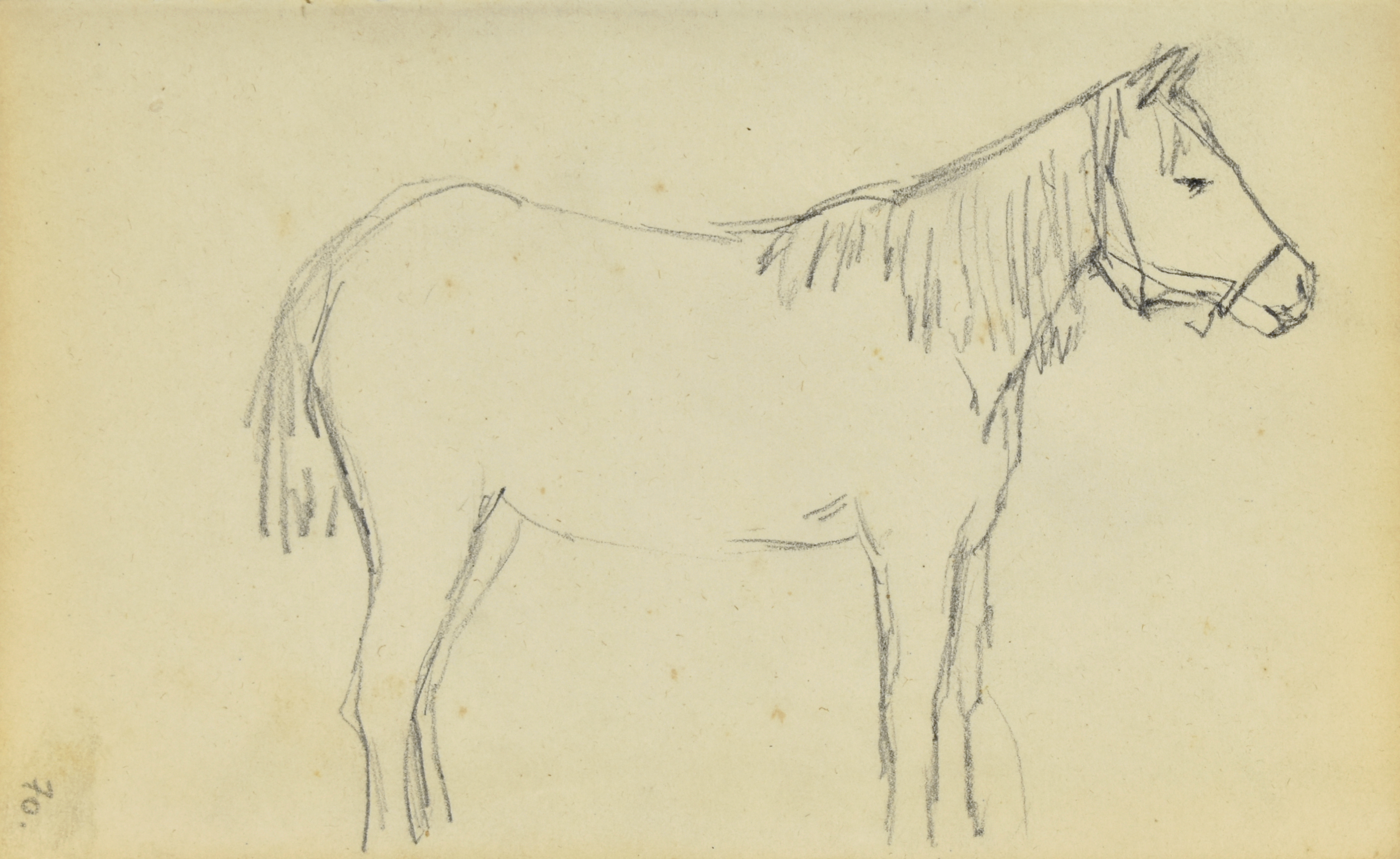 Koń stojący ukazany z prawego boku