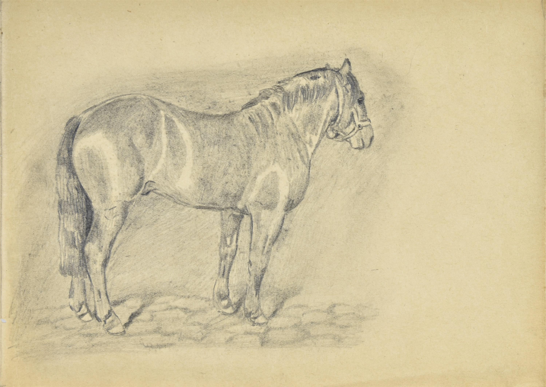 Szkic konia w ujęciu z prawego boku