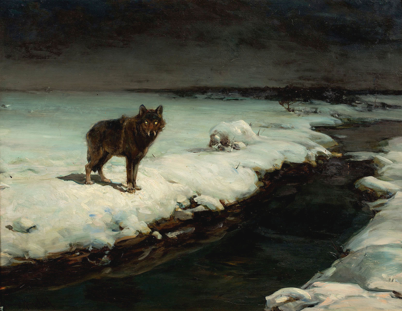 Wilk, lata 80. XIX w.