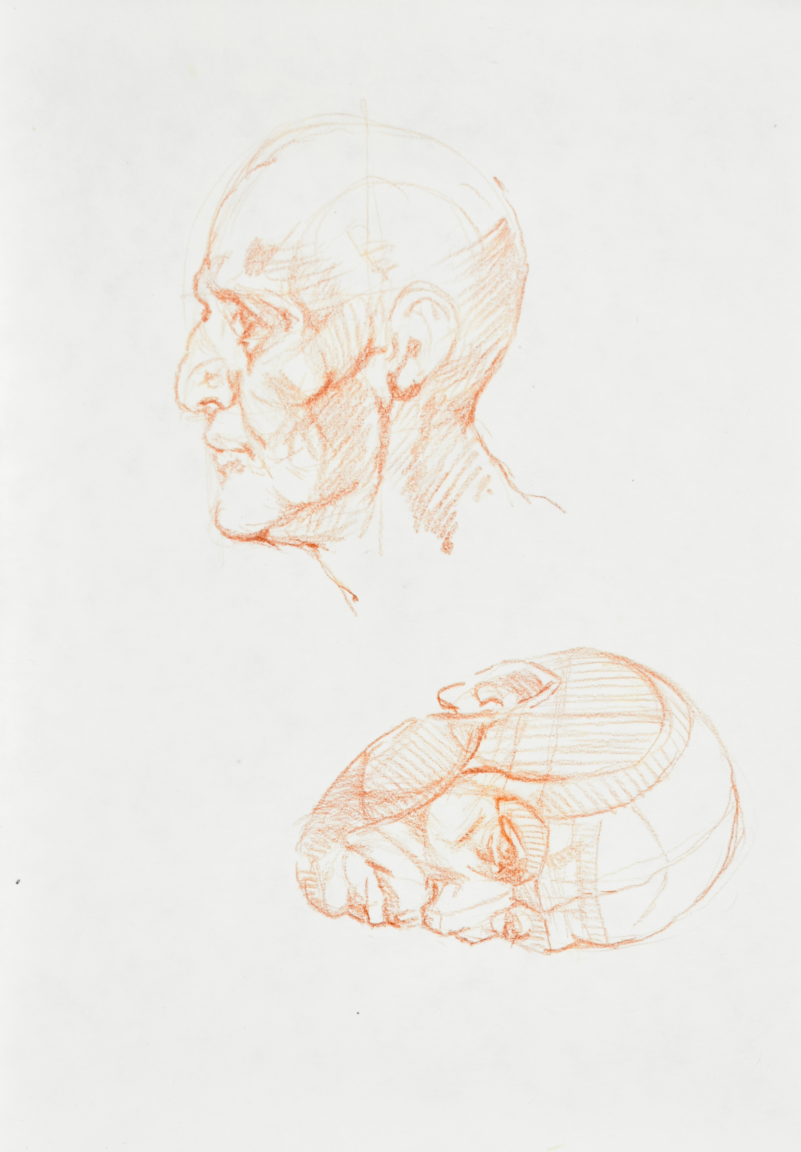 Szkice głowy z prawego i lewego profilu