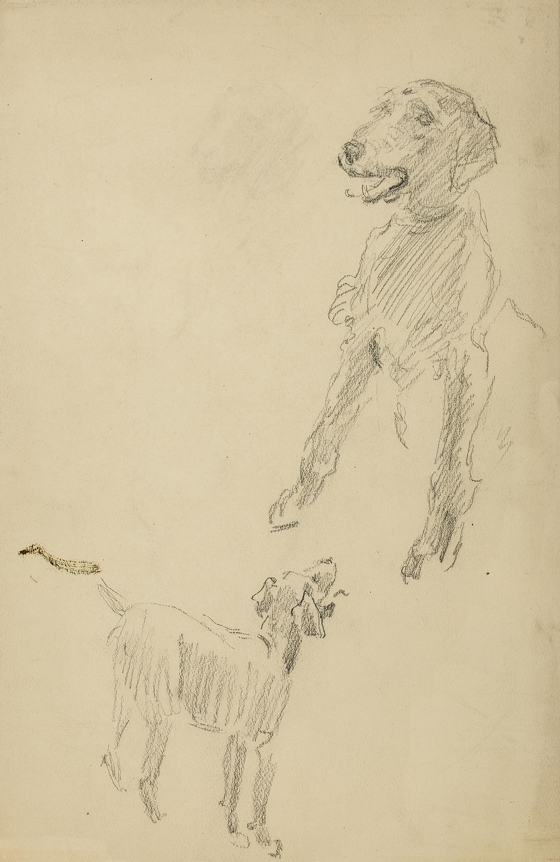 Szkic psa