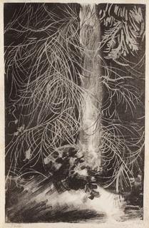 Pień świerku z plątaniną suchych gałązek, 1924