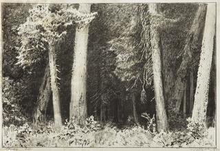 """""""Wnętrze lasu"""" z teki """"Wrażenia z Białowieży"""", 1922"""