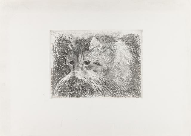 Kot, lata 20. XX w.