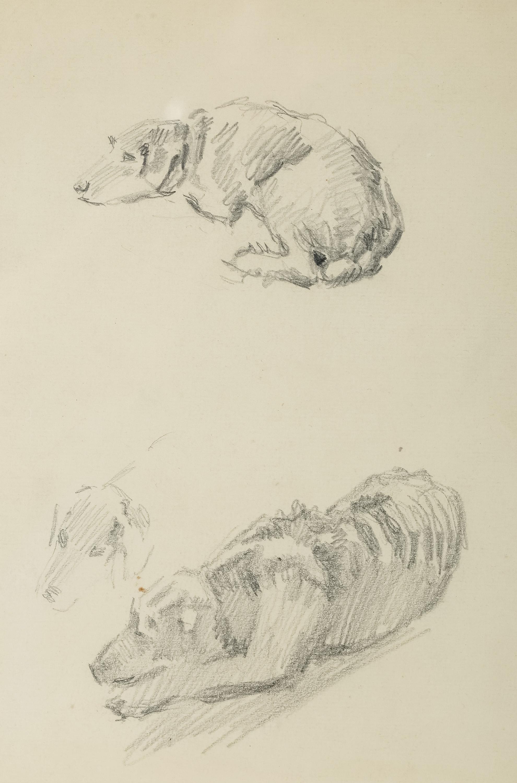 Szkice psów