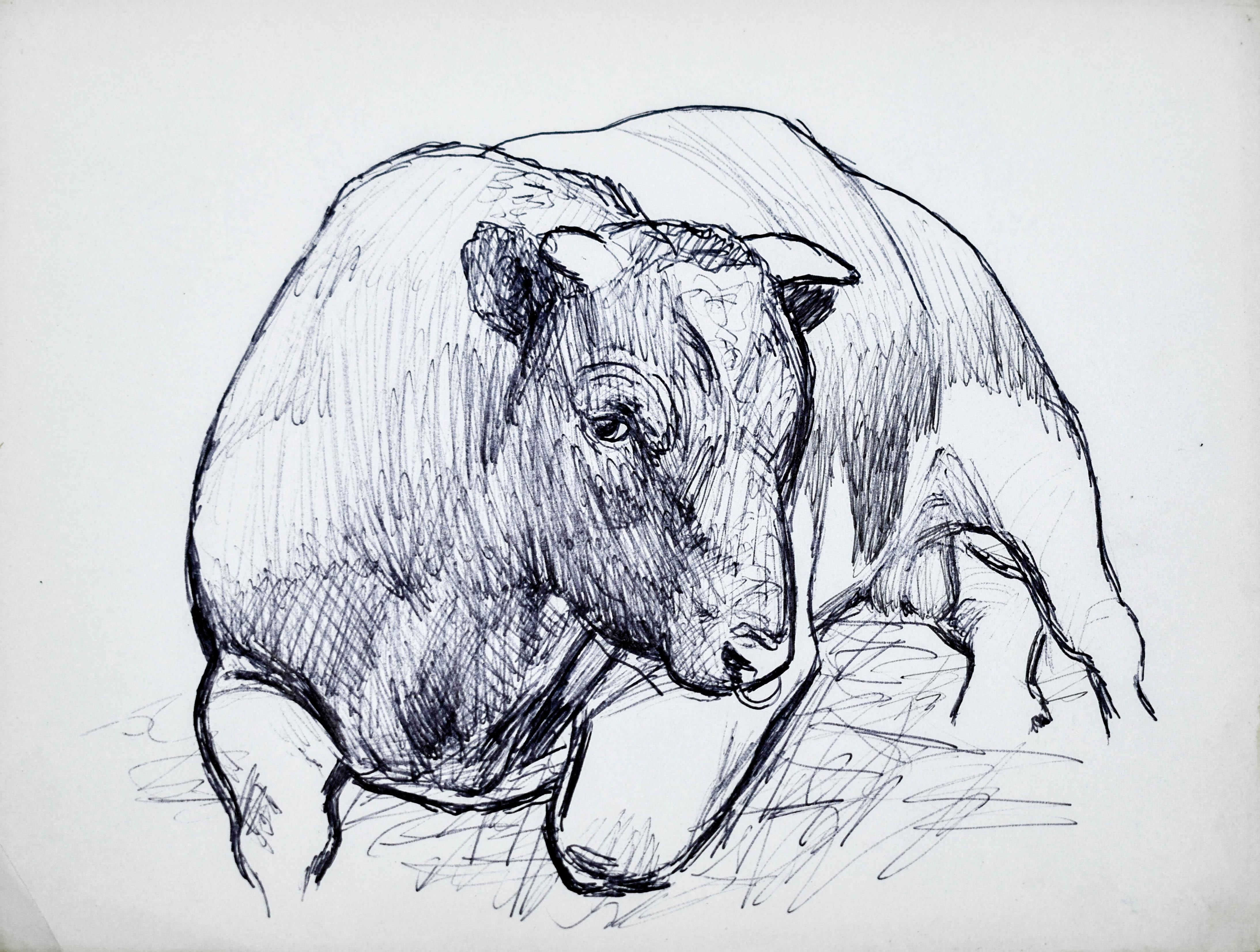 Szkic leżącego byka