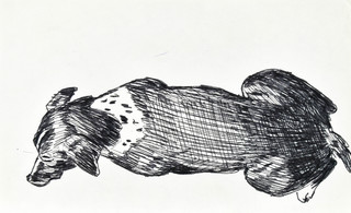 Siedzący pies w ujęciu z tyłu