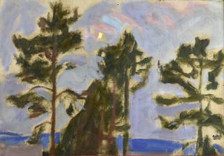 Sosny, 1909