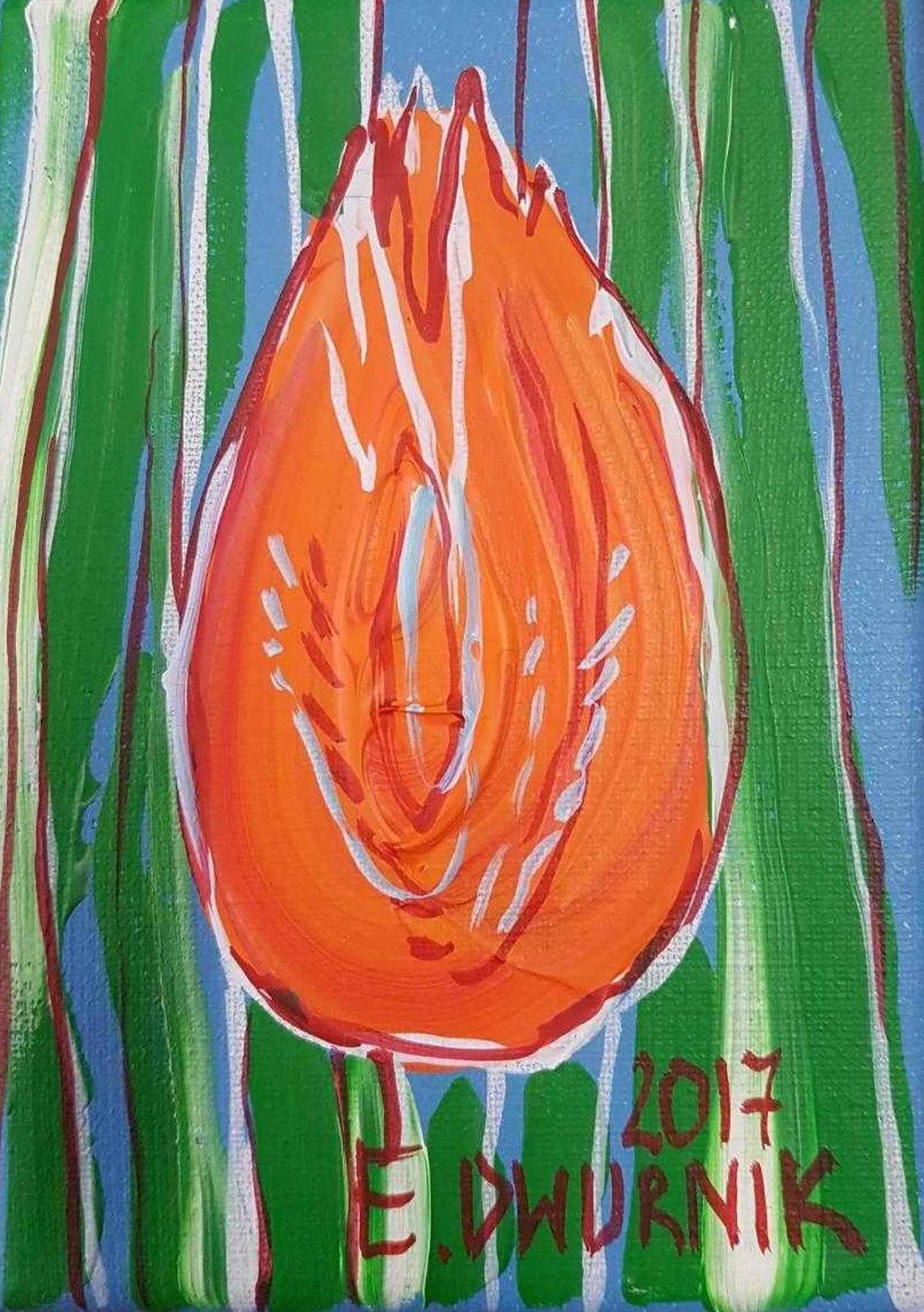 Mały pomarańczowy tulipan, 2016