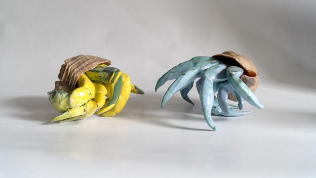 Kraby w muszlach, 2021