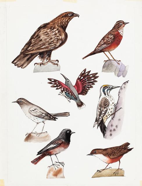 Szkice ptaków, 1972